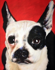 Boston Terrier by James